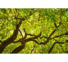 Color Tree Photographic Print
