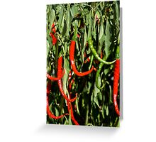 Red Chili Peppers Greeting Card