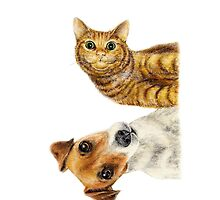 cat and dog by Laura Bruni