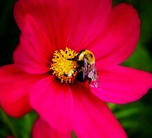 Humble Bumble by Rebecca Reist
