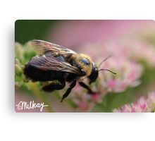 Iridescent Bumble Canvas Print