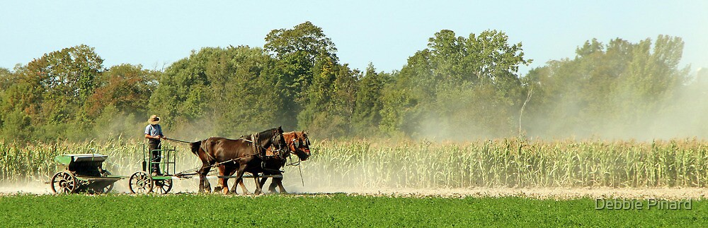 Working the Fields - New York State by Debbie Pinard