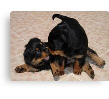 Rottweiler Puppies Playing Canvas Print