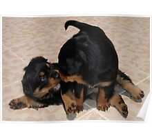 Rottweiler Puppies Playing Poster