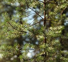 pine needles by mrivserg