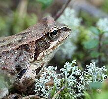 toad  by mrivserg