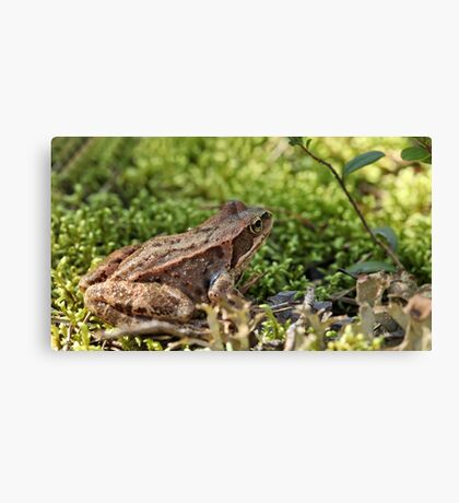 toad in the grass Canvas Print