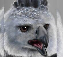 Harpy Eagle by SimonMeehan