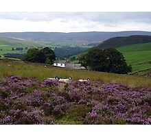 Above Bolton Abbey Photographic Print