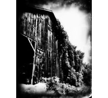 ivy laced tobacco barn Photographic Print