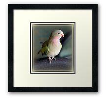 My Princess Kate - princess parrot Framed Print