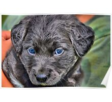 Rescue Puppy Poster