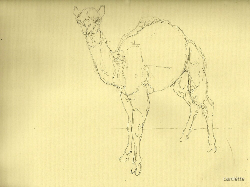 Camel by Cameron Hampton