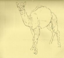 Camel by Cameron Hampton