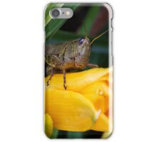 Hopping for a Case for my iphone 5  iPhone Case/Skin