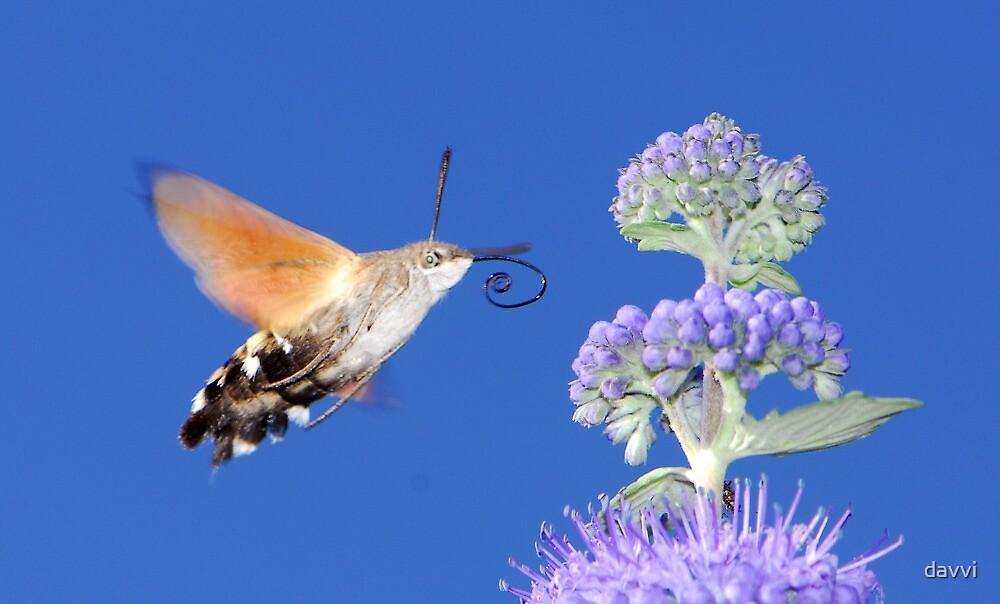 l like purple by davvi