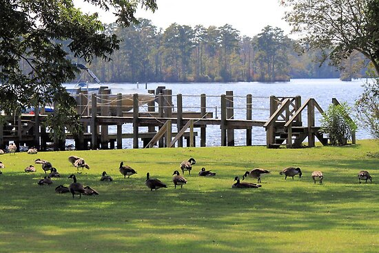 A Whole Lot of Geese by WeeZie