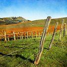 Napa Valley in Autumn by Ellen Cotton