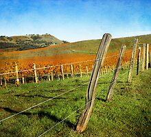 Napa Valley in Autumn by Ellen Cotton