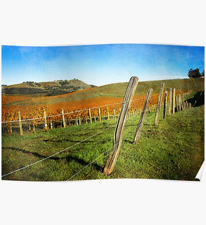 Napa Valley in Autumn Poster