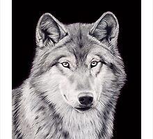 Wolf by rexkadinger