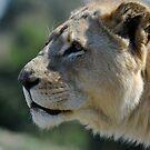 African Wildlife by Luke Donegan