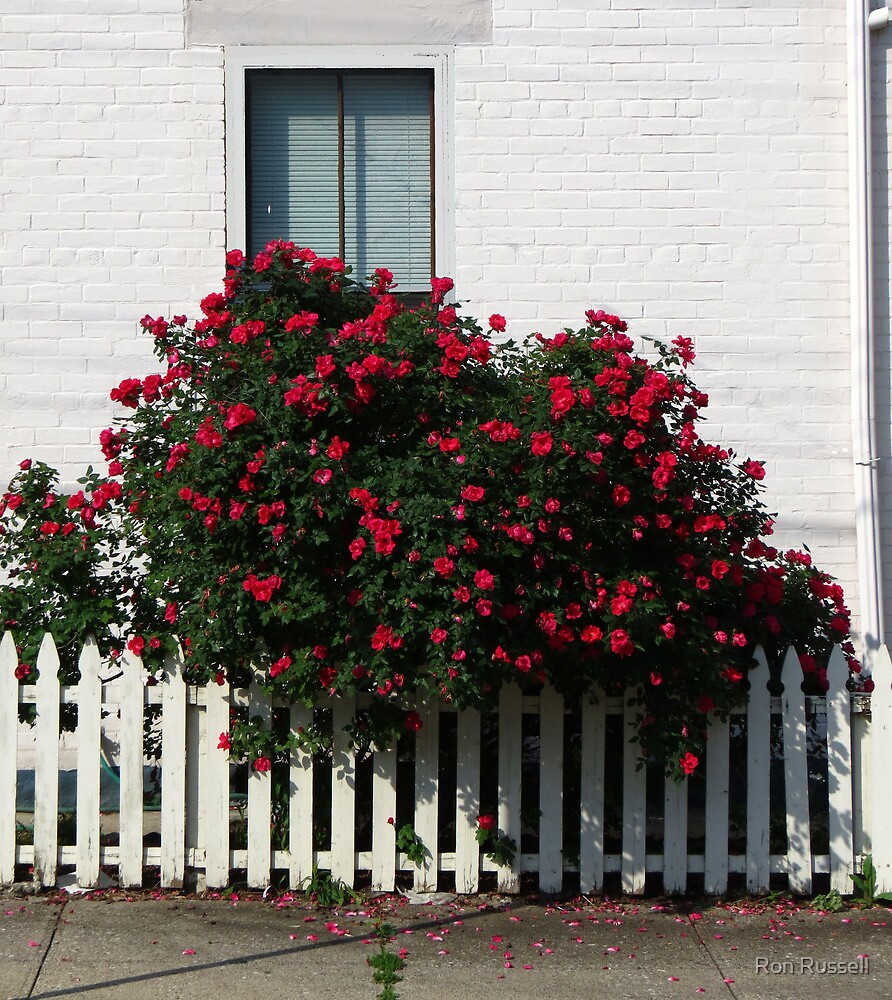 A Splash of Roses by Ron Russell