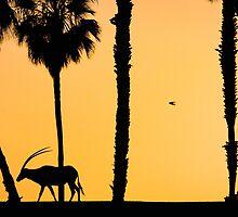 The Sunset by Stephanie B
