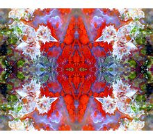 Birds Outside The Box (Red Lightning Agate) Photographic Print