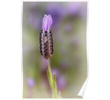 Lavender lonely Poster