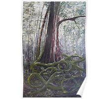 Lamington forest Queensland Poster