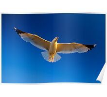 White bird soaring in the blue sky Poster