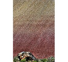 Baby Painted Hills Photographic Print