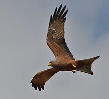 Kite... by Macky
