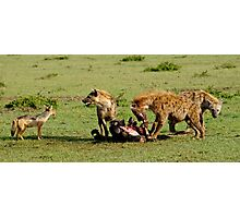 """food chain"" Photographic Print"