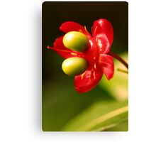 Not only roses are RED Canvas Print