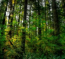 Yellow and Green Light by Charles & Patricia   Harkins ~ Picture Oregon