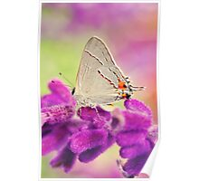 Little Silver Butterfly Poster