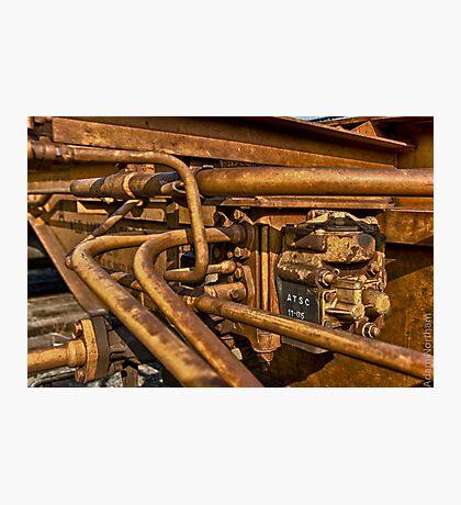 Steel Web Photographic Print