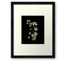 Chamelaucium uncinatum (Geraldton Wax). Flower scan. Framed Print
