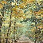 The road in the autumn wood by VallaV
