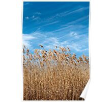Marsh grasses waving in the breeze Poster