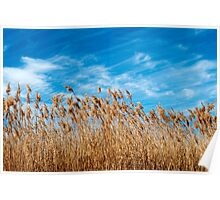 Field of grasses waving in the breeze Poster