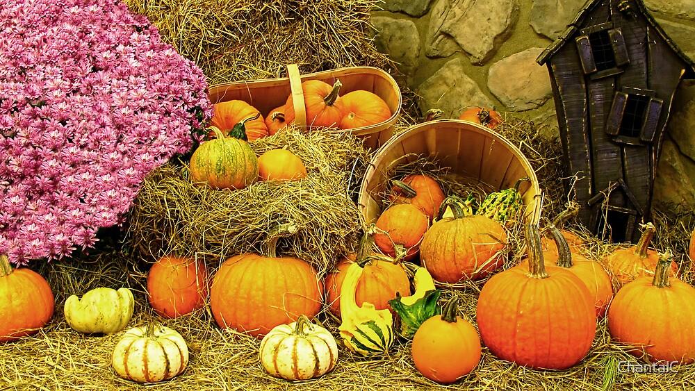 Decorative Pumpkins & Gourds in a Fall Cornucopia by Chantal PhotoPix