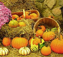 Decorative Pumpkins & Gourds in a Fall Cornucopia by Chantal PhotoPix