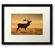 Morning Stag Framed Print