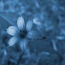 Feeling Blue by Jennie L. Richards