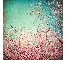 Pink autumn leafs on blue textured background Photographic Print