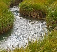 Wetlands and grasses by David Chesluk