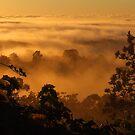 Golden Fog... by debsphotos
